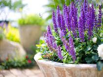 春はガーデニングのお花も見ごろです!