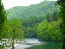 新緑がまぶしい青木湖の初夏