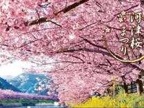 2月10日から3月10日まで河津桜まつり開催中