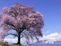 【じゃらん限定】春旅は桜・桃の花咲く山梨へ♪★1泊朝食付・おひとり様7,500円★