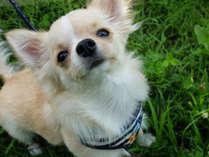 【ペットルーム】ワンちゃんと一緒にお泊り♪★5kg以下の小型犬までOK!★《選べる夕食 和・洋・中》