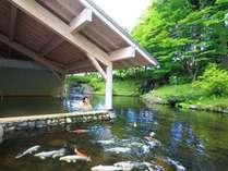 【雫石高倉温泉(夏)】屋根付き温泉露天風呂。鯉を眺めながら入浴できるお風呂は必見!