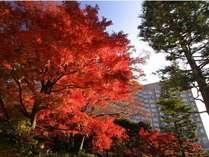 秋の紅葉時期の庭園からのホテル外観