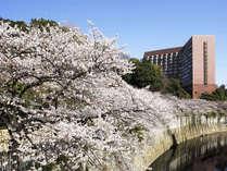 桜の季節の外観