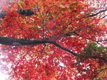 【11/17~12/9期間限定!】熱海梅園もみじ祭りに行ってみよう!【1泊2食付き】
