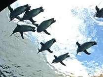 空飛ぶペンギン?
