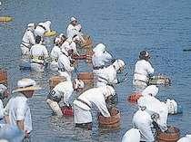 海女の祭典★菅島しろんご祭り(7月初旬に開催)
