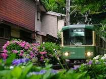 !江ノ電に乗ってあじさい巡り♪※提供:鎌倉市観光協会