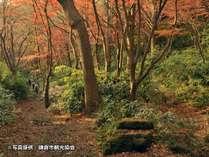 イメージ写真提供:鎌倉市観光協会