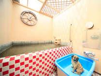 *半露天貸切風呂『元気の湯』/天井から明るい陽の光が差し込む明るいお風呂。ペット利用も可能♪