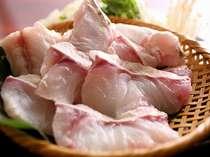 【クエ】淡白な白身ながら、肉の繊維にキレイに脂が乗り、旨味が深い「紀州のクエ」