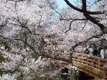 【じゃらん限定】 春の1ドリンク付きイタリアンディナープラン