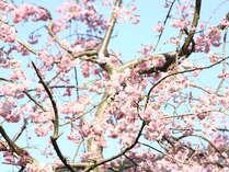 ◇お花見しましょ◇鯛しゃぶ付き会席+お花見弁当付き