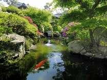 新緑と優雅に泳ぐ鯉を眺めてお寛ぎ下さい