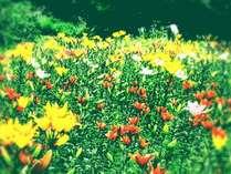 ★★花畑が見えるお部屋(花の里入園チケット付き)★★花畑前和室限定プラン(7/15~8/2限定)