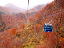 【往復リフト半額!】色鮮やかな紅葉の山々を楽しむ!天然温泉で日ごろの疲れを癒そう♪