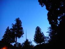 夕闇の御神木