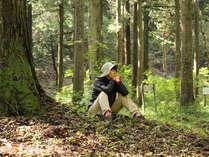 【1泊2食付】森に癒される♪~森林セラピープラン~