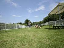 *約200坪と広々した空間…愛犬と一緒に思い切り遊びましょう!
