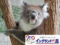 【イングランドの丘チケット付】コアラに会える♪淡路島で遊び&食満喫プラン~海幸三昧★