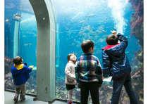 ☆下田海中水族館のチケットがセットになったお得なプラン!