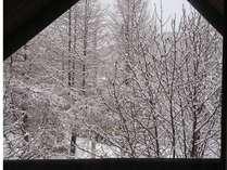 ログからの幻想的な雪景色♪