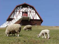 【六甲山牧場】動物とふれあったり、遥か海まで望める眺望や自然を満喫していただけます。