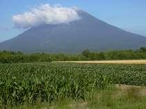 とうもろこし畑 ジャガイモ畑 麦畑と羊蹄山
