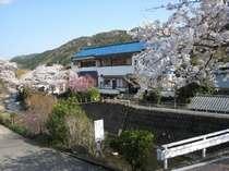桜の季節の当館