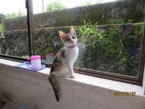 二代目看板ネコのさくらです、生後3ヶ月のやんちゃな娘ですがよろしくお願いします。
