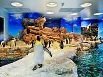日本最大の施設『ペンギン村』OPEN!「海響館」、海峡ゆめタワーの割引券あり♪海響館まで車で5分。