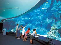 美ら海水族館:珊瑚の海