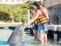 ドルフィンエンカウンター:ゲームをしながら生態を学んだり、膝まで水中に入ってイルカとふれあいます。
