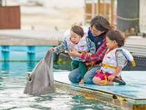 イルカとふれあえる体験