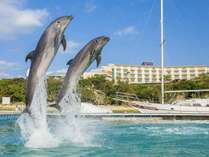イルカの大ジャンプ!