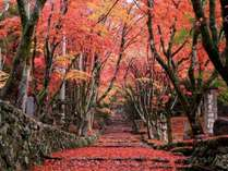 紅葉の名所鶏足寺の画像