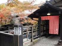 【紅葉に囲まれた湯本荘】秋には美しく色づきます。