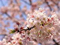 休暇村園地が色彩鮮やかに♪春うららプラン♪~園地を眺めたり、ウォーキングにも最適!~