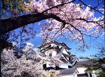彦根城(春)