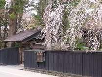 石黒家と桜