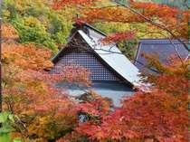 ホテルより車で15分程の霊松寺の紅葉見頃は例年10月中旬から