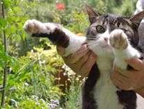 """*看板猫の""""ひめ""""も皆様のお越しをお待ちしております♪"""