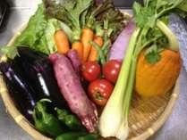 地元産を中心にした新鮮野菜