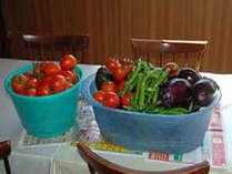 自家栽培の無農薬野菜です。