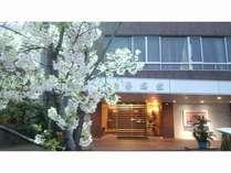 玄関(桜の季節)