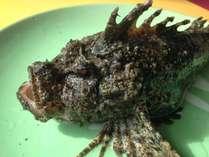【二食付(オコゼ付)】朝市場で水揚げされた獲れたて海の幸、オコゼを食するプラン♪