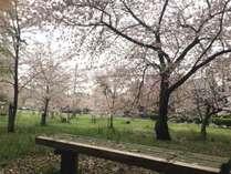 <お花見×春会席>琴弾公園の桜を見ながらお茶を愉しむ♪オススメスポット巡りの旅