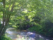 温泉街を流れる夏の湯川はお散歩にも