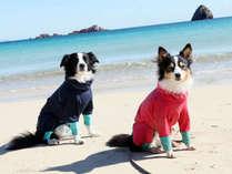 **小型犬~大型犬までのワンちゃん(ペット)受入可能!伊豆の海まで徒歩10秒☆足洗い場もあります♪