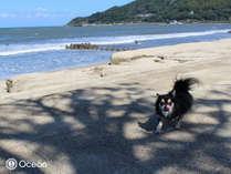 【素泊まりわんちゃん宿泊無料スタンダードルームプラン】~愛犬と一緒に過ごすお部屋で贅沢なひとときを~